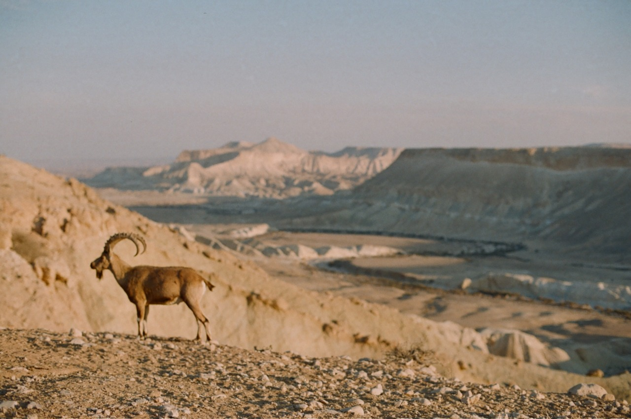 Desert, 2012