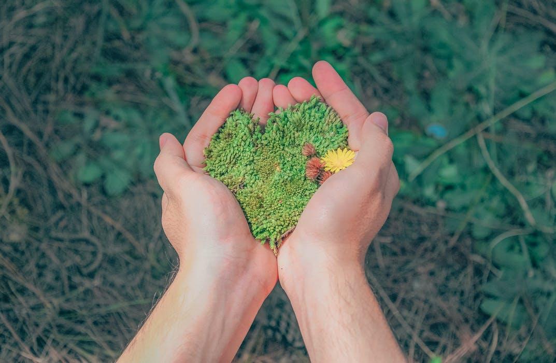hands.holding.grass.seed.jpeg