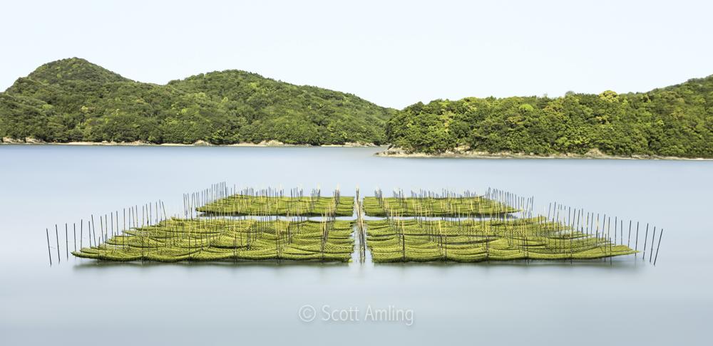 Seaweed Beds; Ise Bay, Japan (2017)