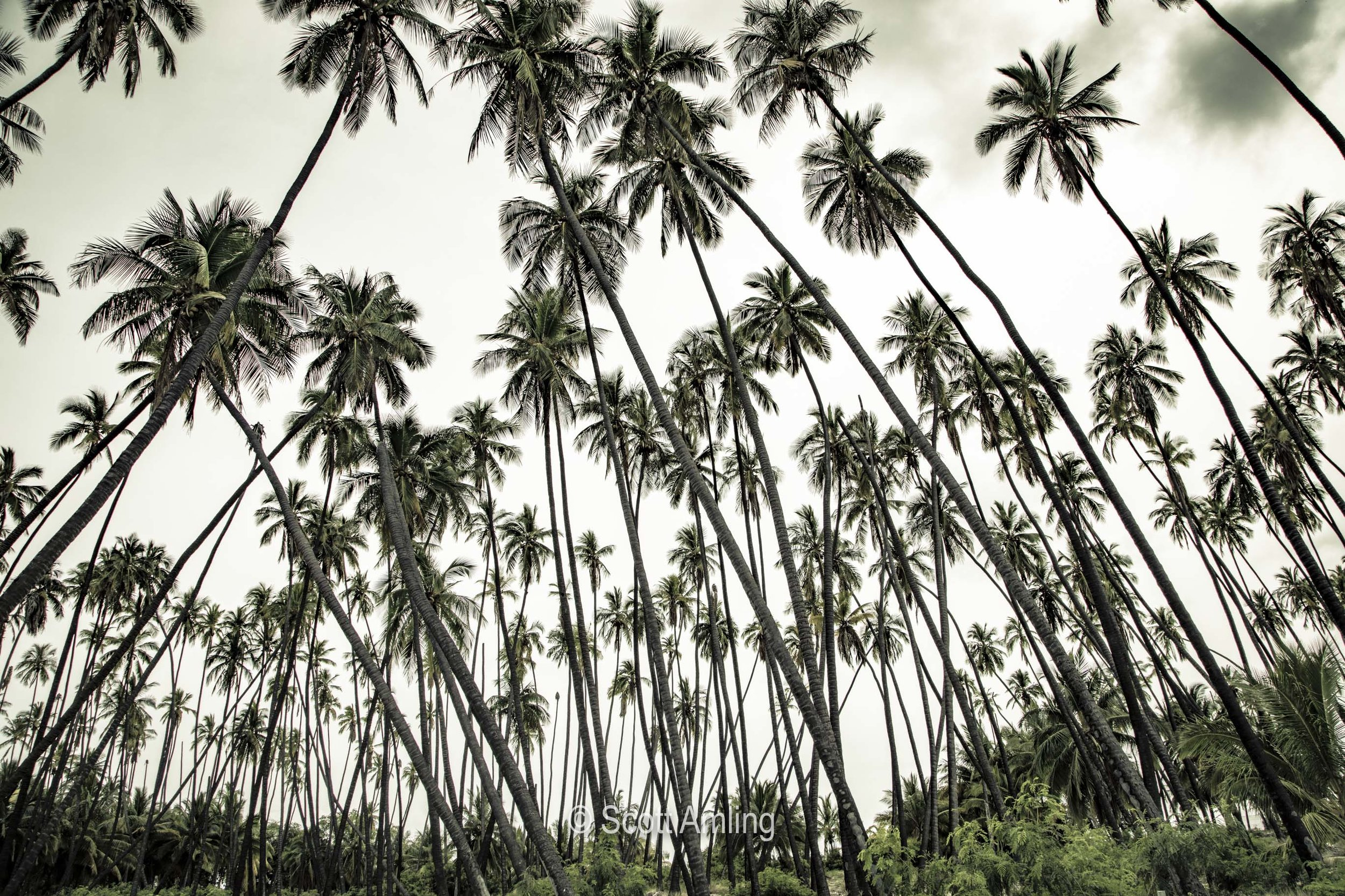 King Palm Groves