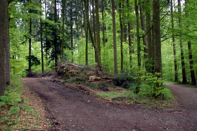 forest_two_paths-640x426.jpg