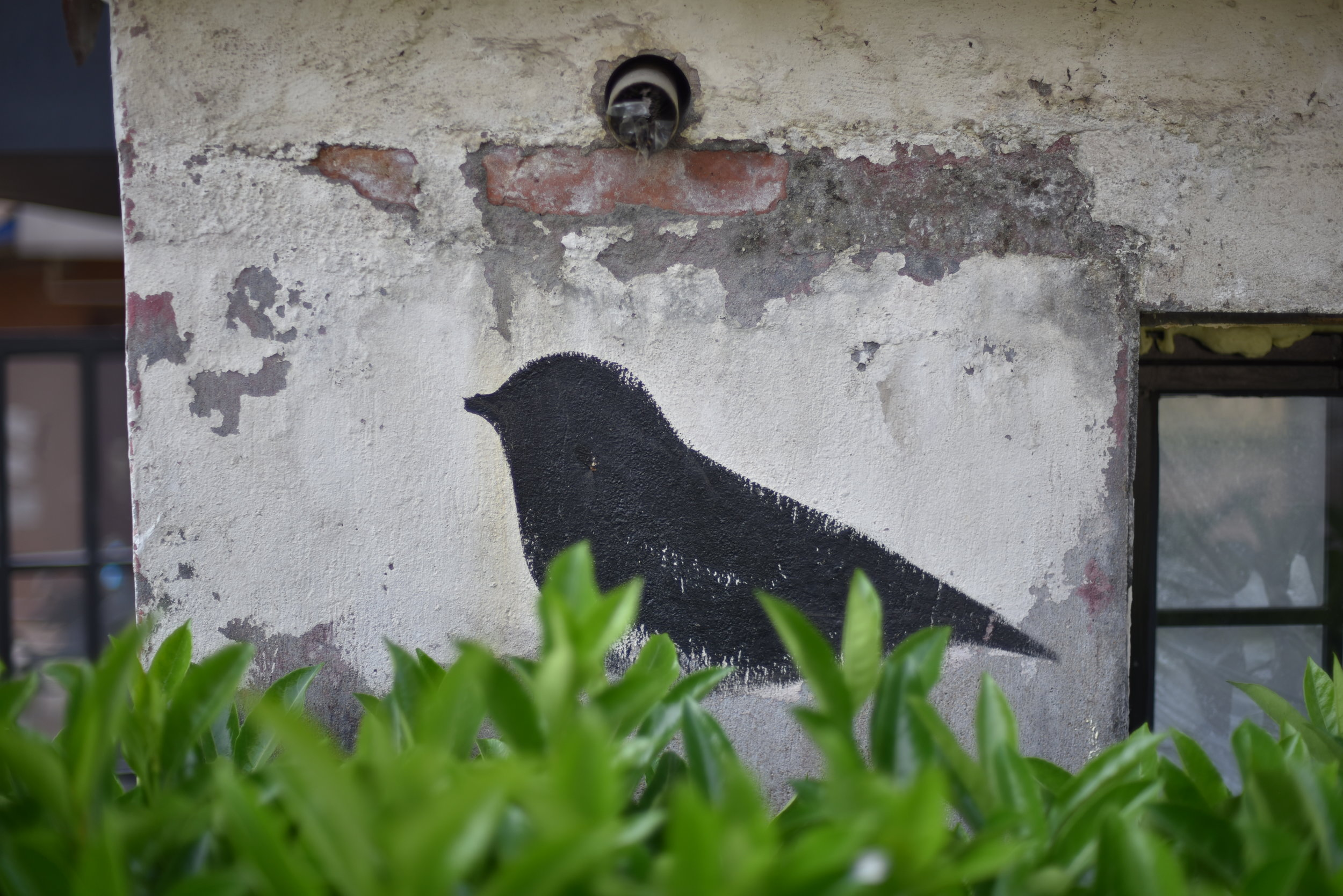 Bird Coffee's logo