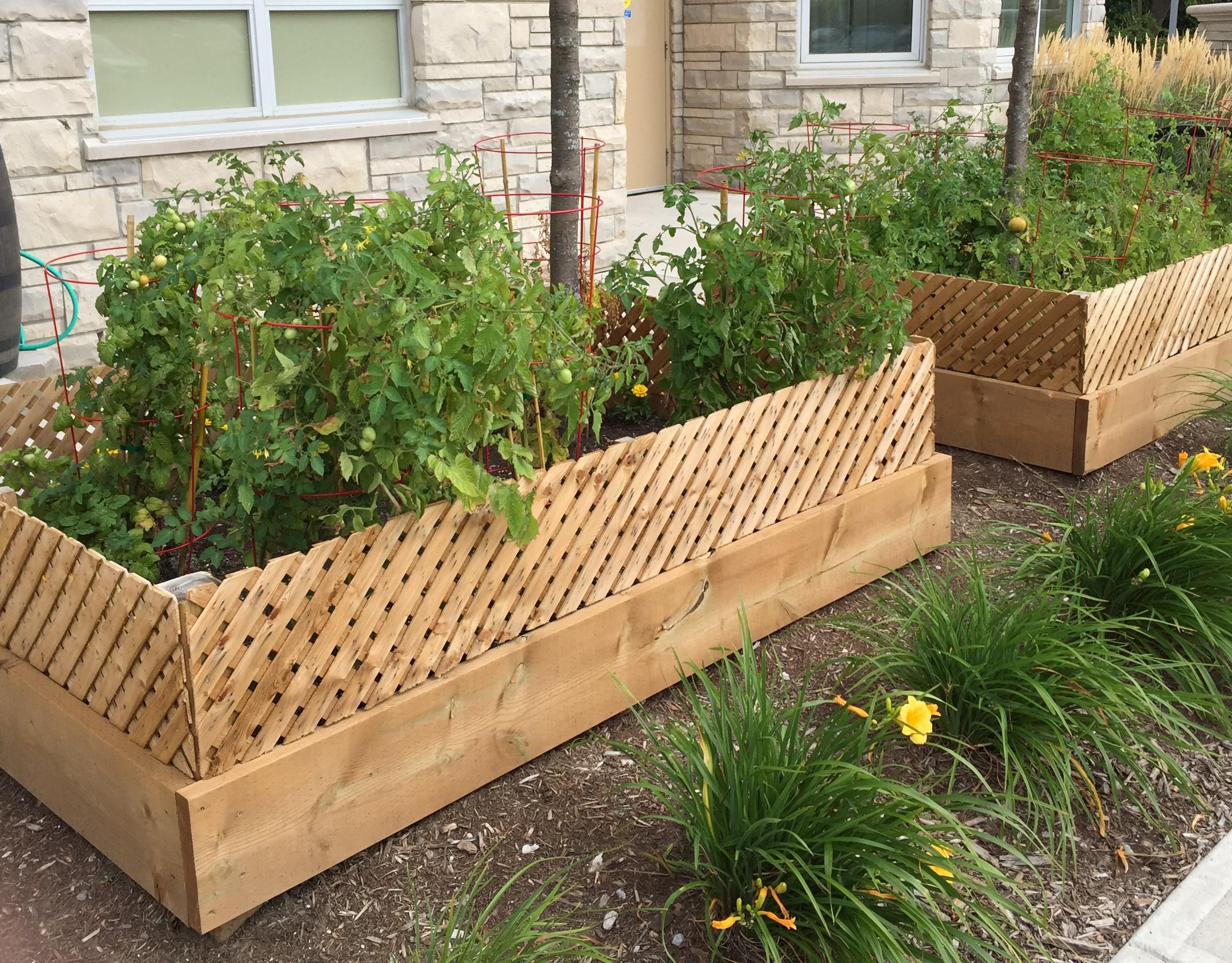 Veggie Beds -