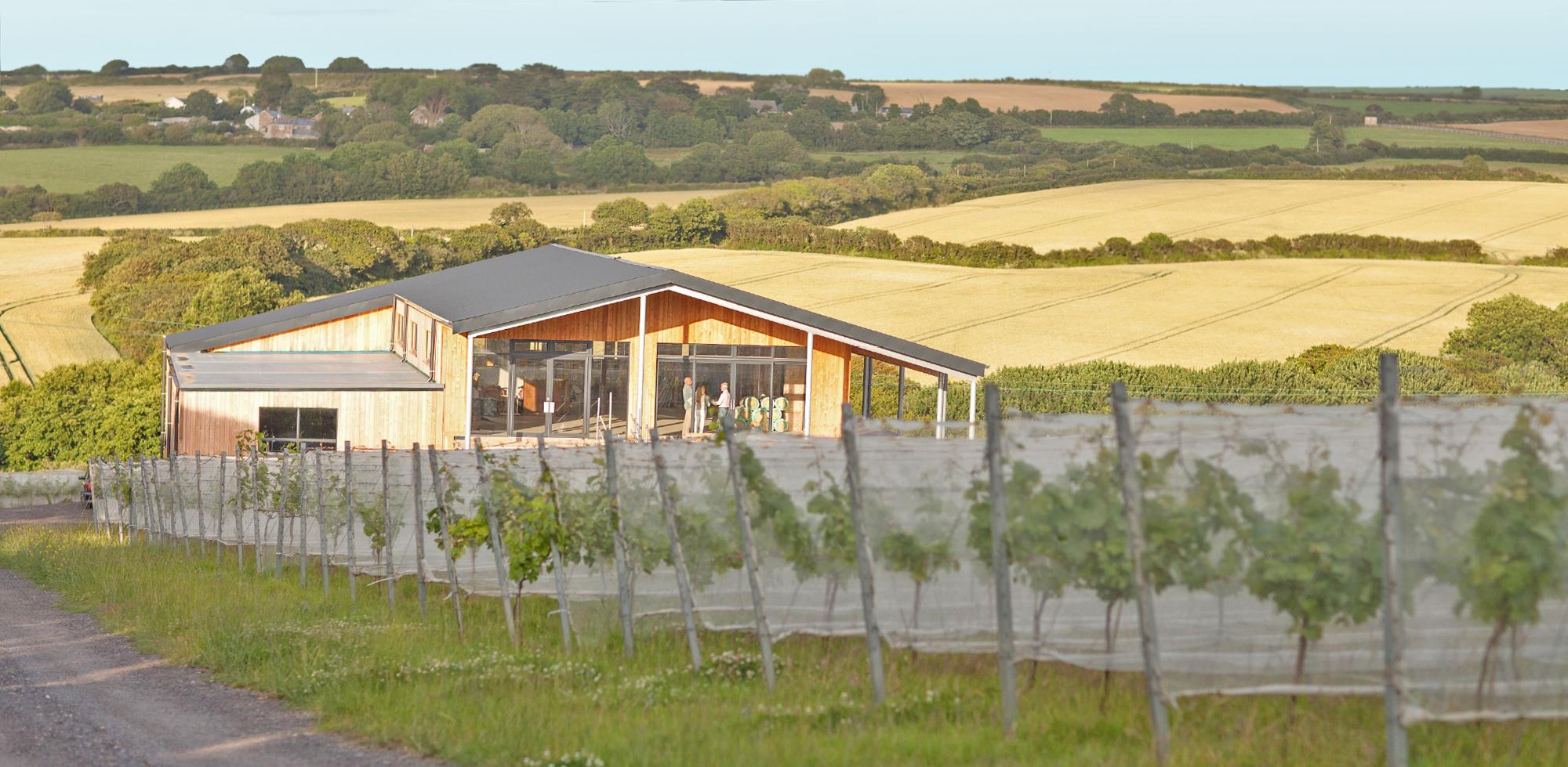 trevibban-cornish-vineyard.jpg