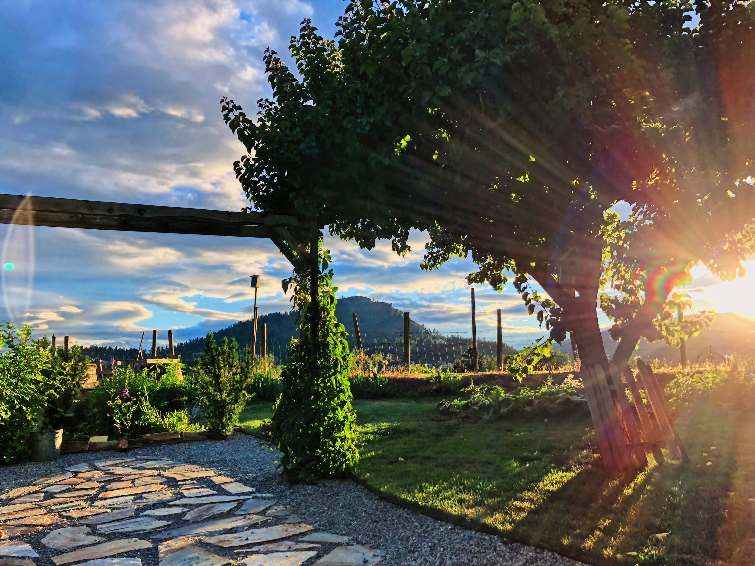 Mom and Dad's backyard - Lakeview Heights, West Kelowna