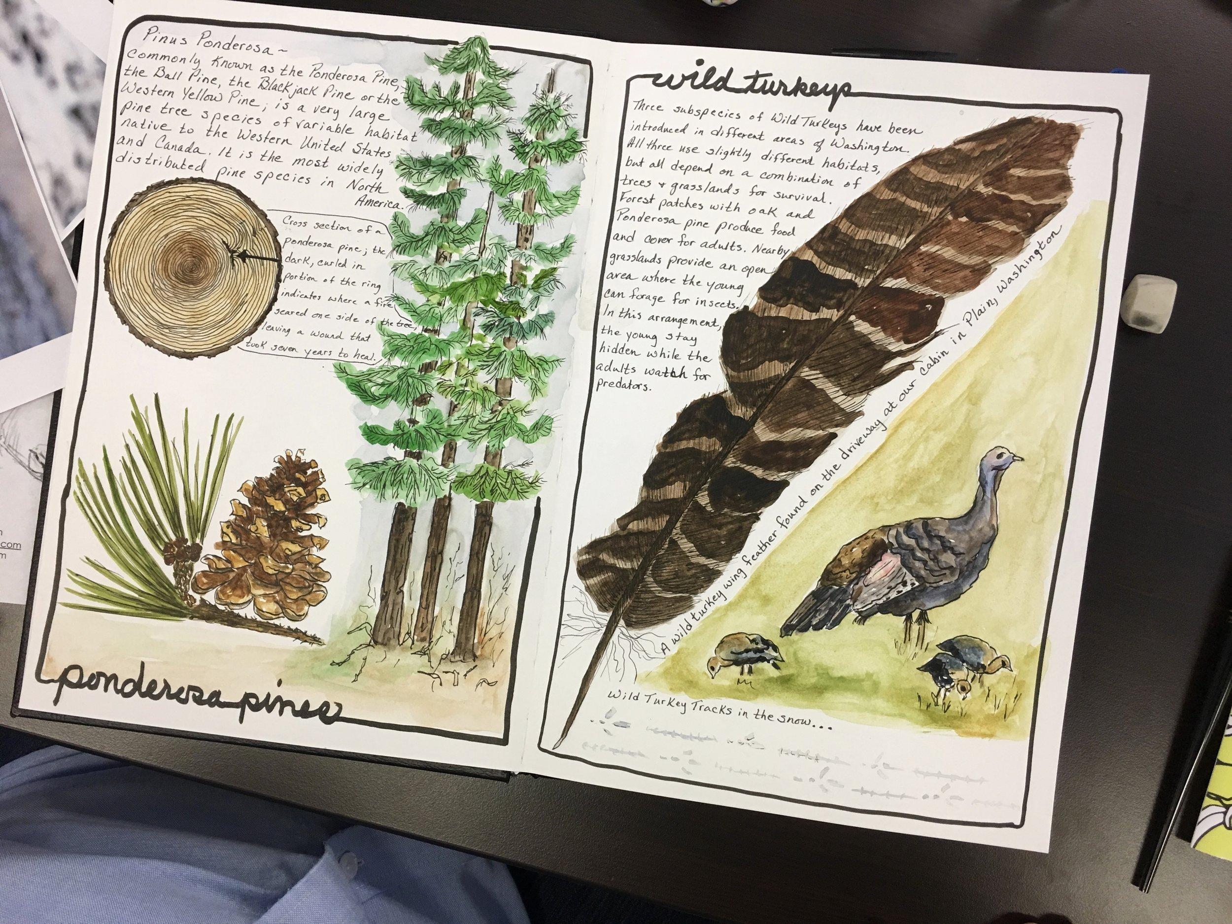 Sandy Hendricks Sketching Nature