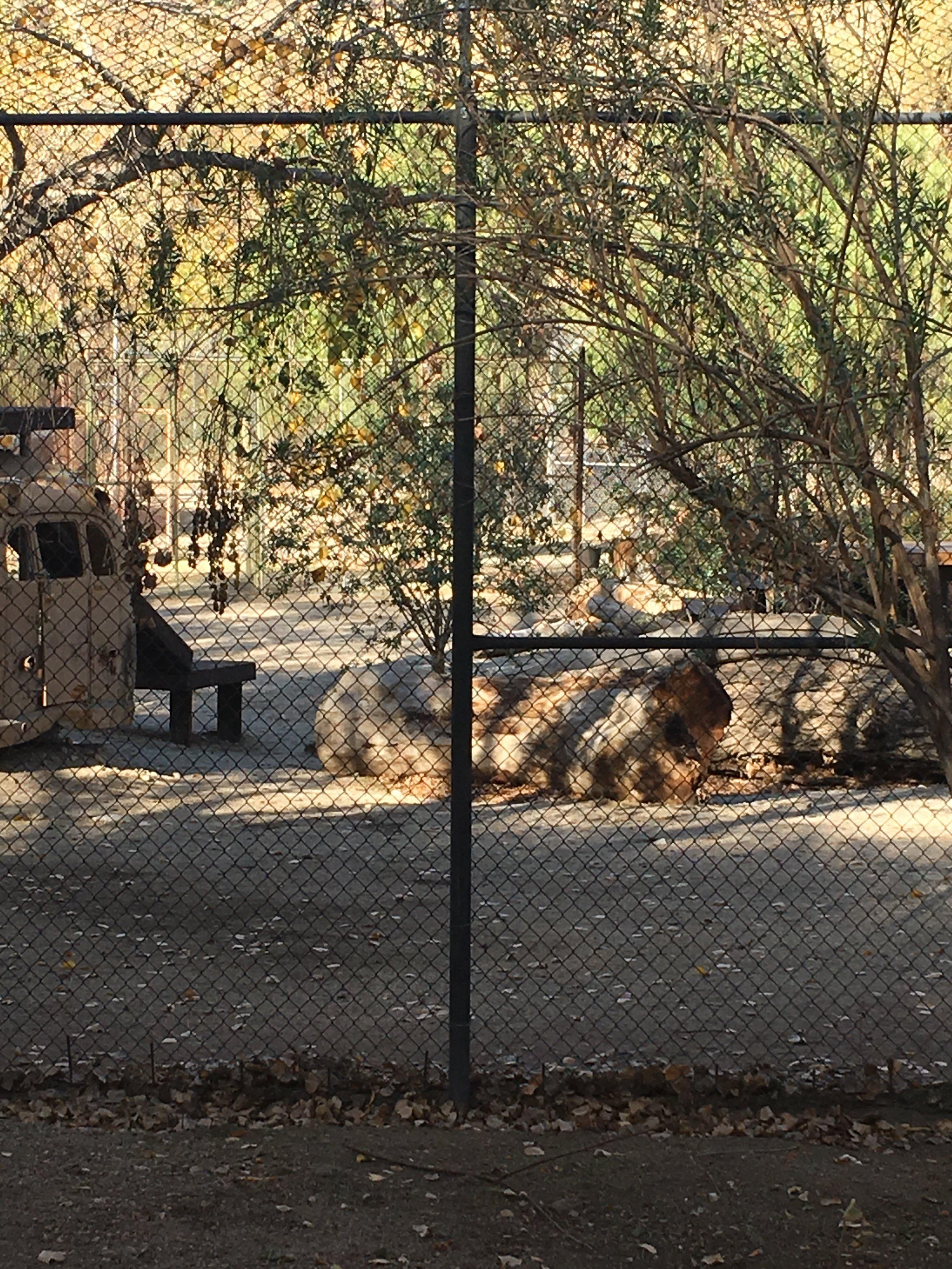 Shambala animal sanctuary