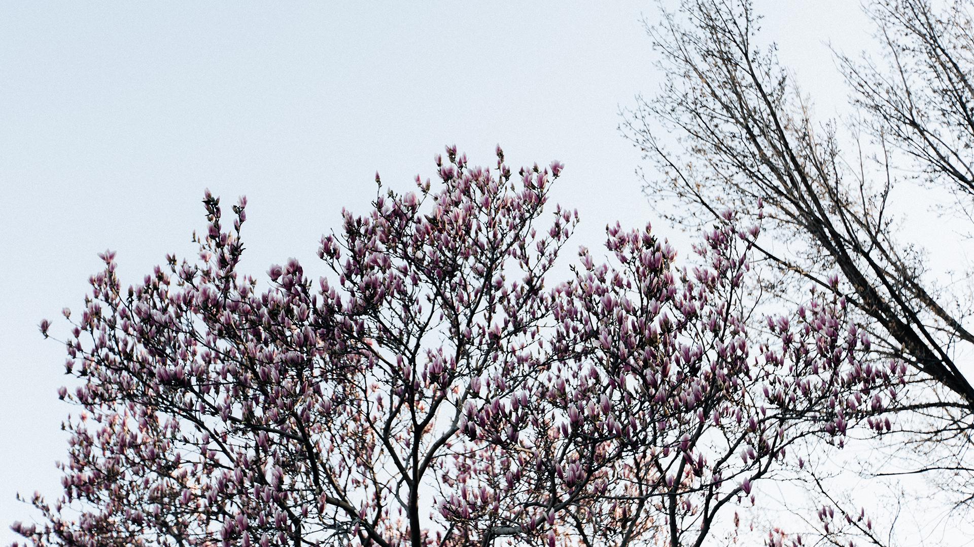 Spring Time2a.jpg
