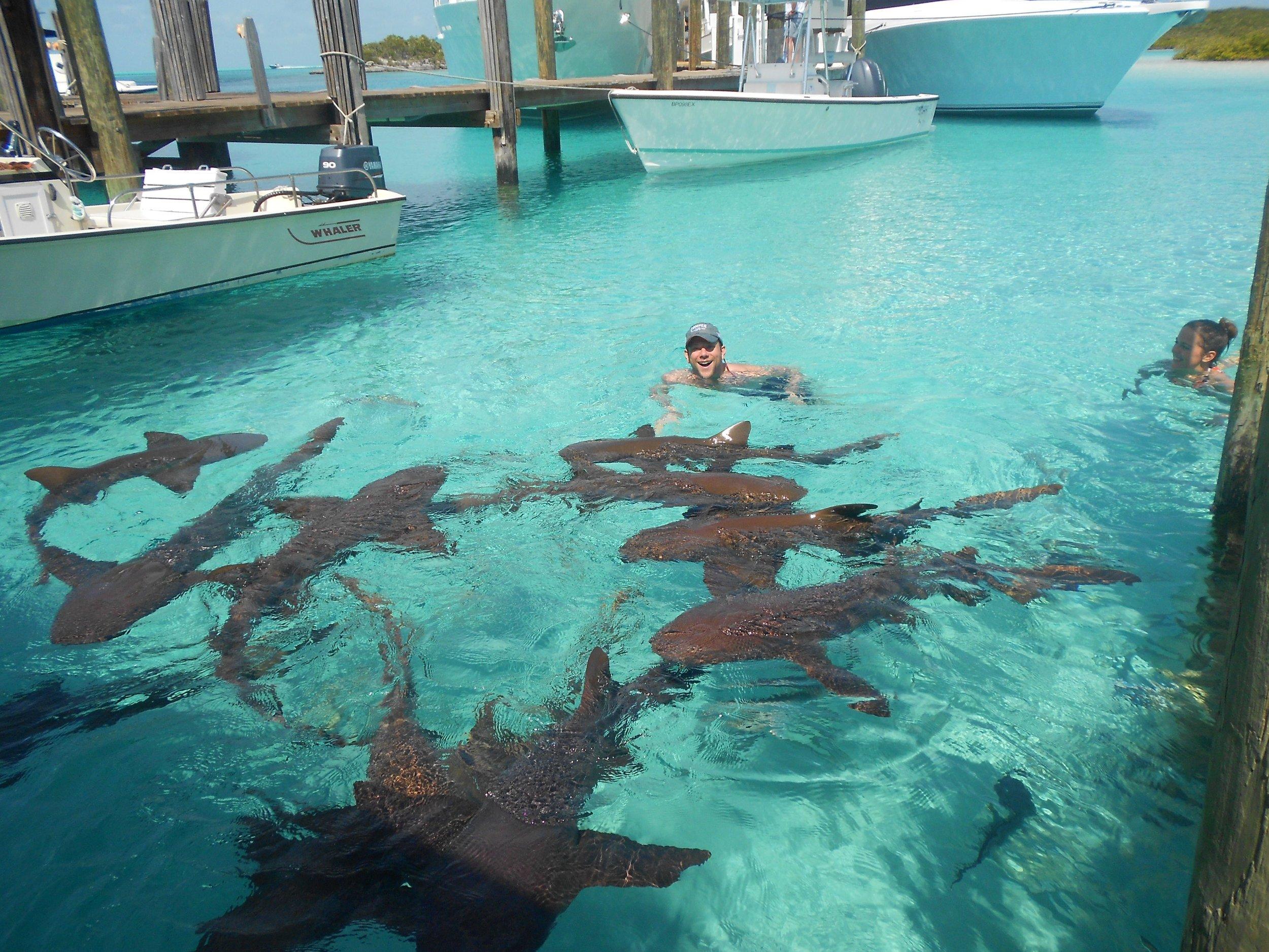 -  Compass Cay Nurse Sharks