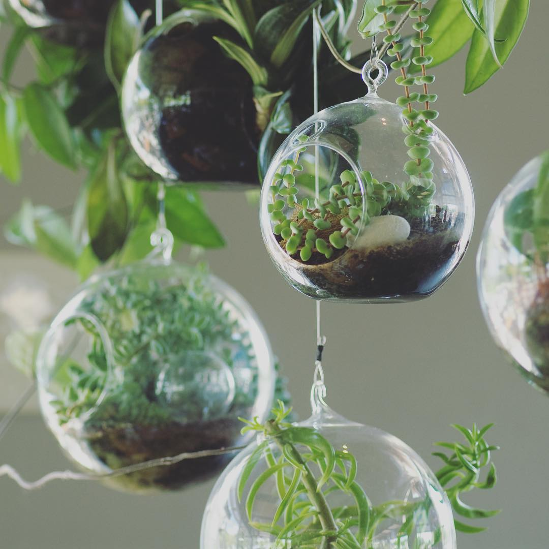 Urban Sprouts2.jpg