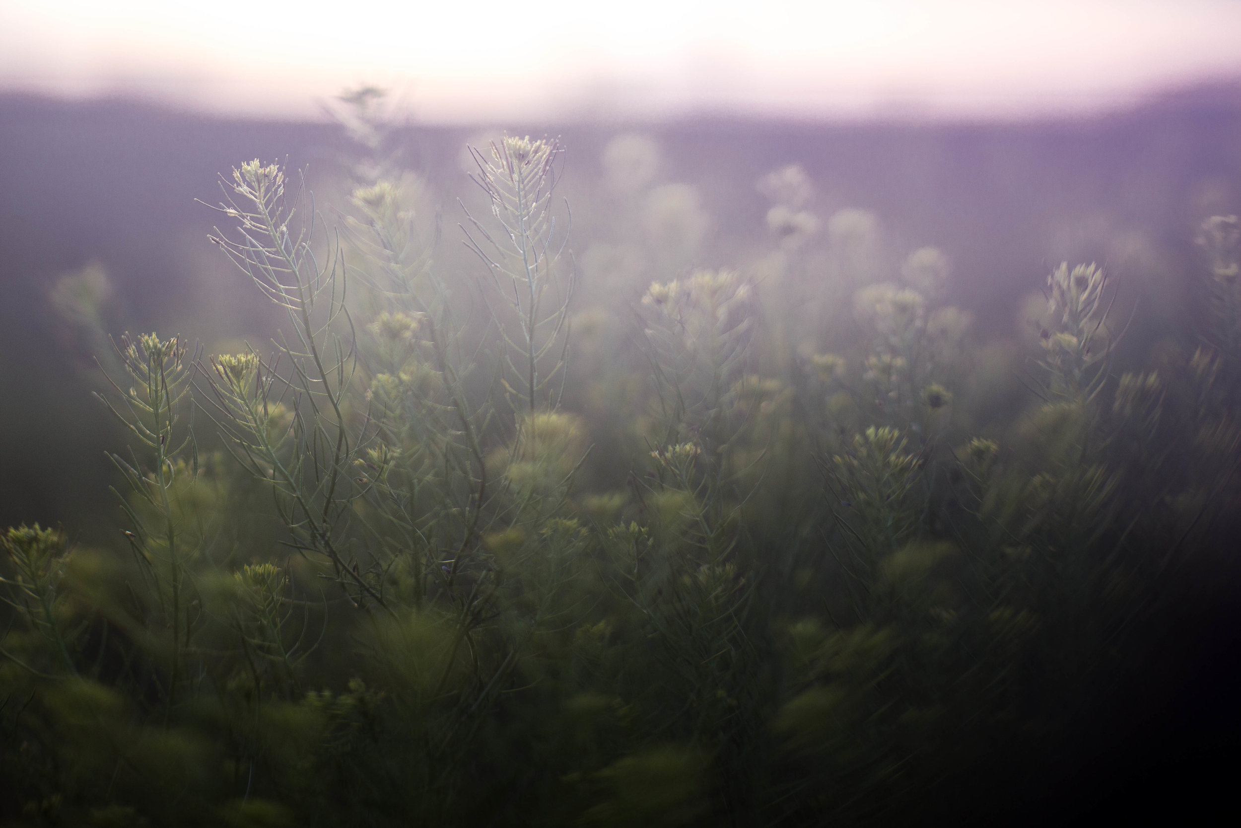 04.10.17 B freelensed sunset weeds-2438.jpg