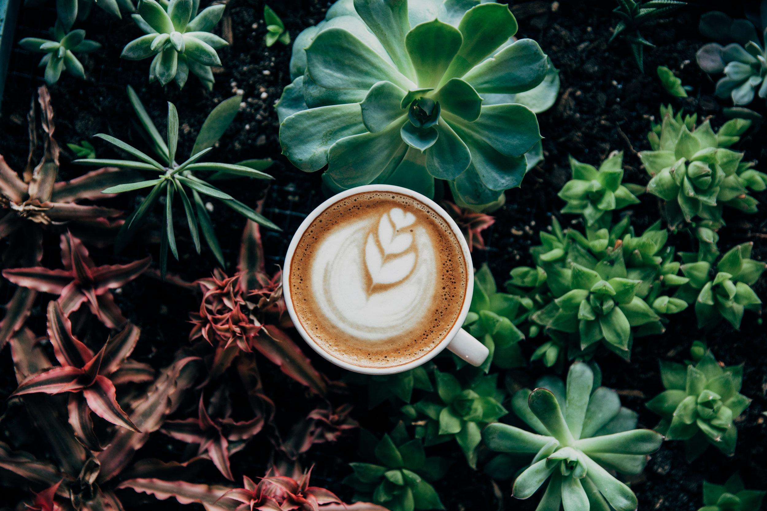 latte art.jpeg