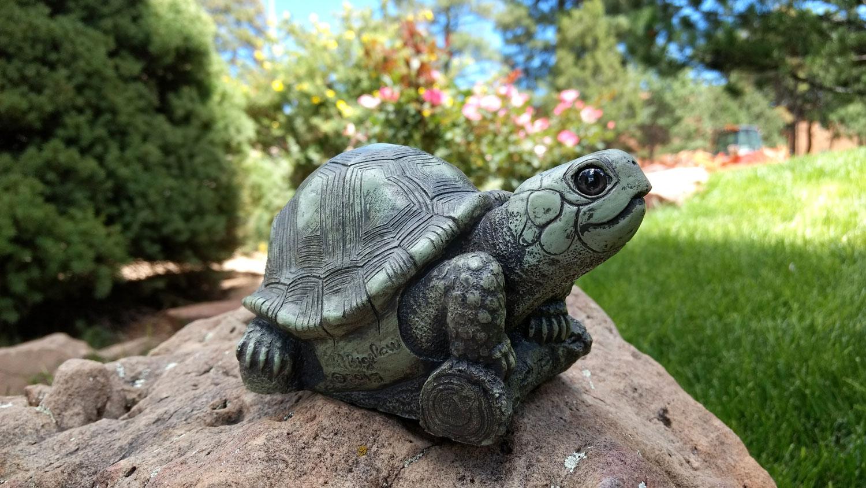 choice-turtle-landscape-8.jpg
