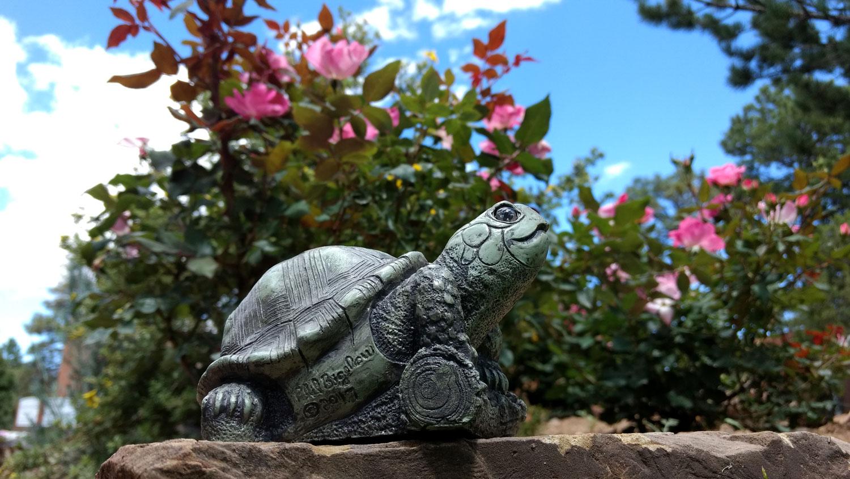 choice-turtle-flowers-rock-wall-9.jpg