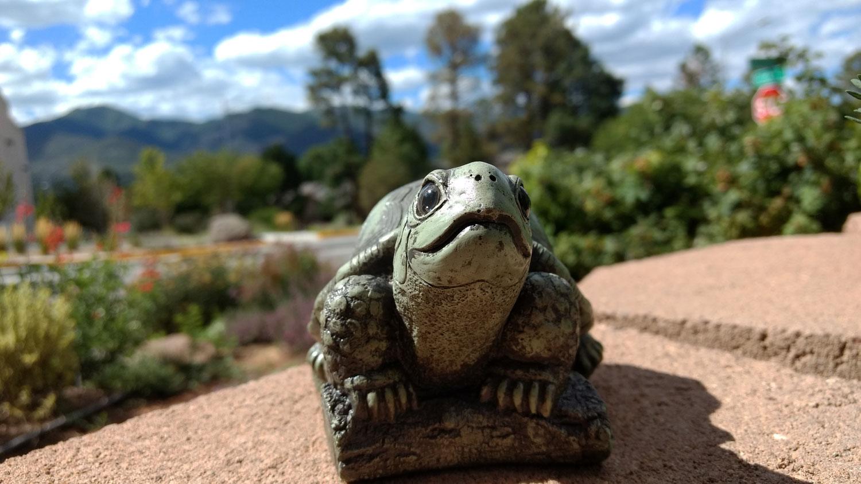 turtle-brick-wall-13.jpg