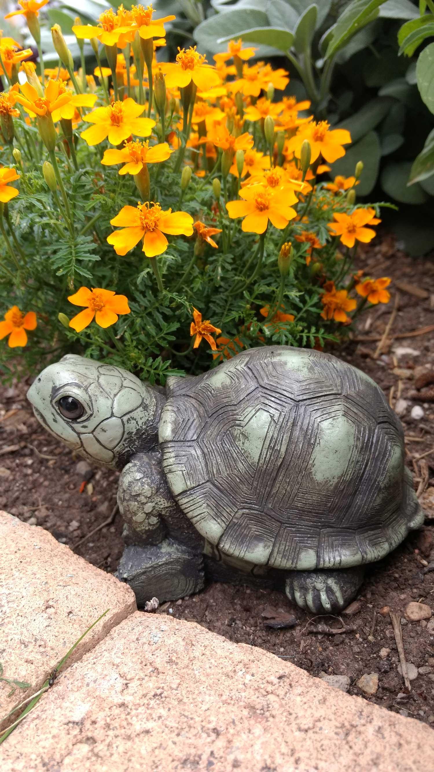 turtle-orange-flowers-12.jpg