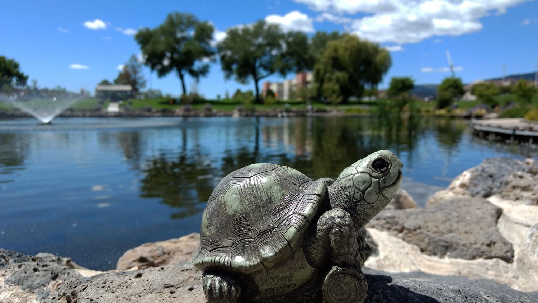 turtle-pond-fountain-7.jpg