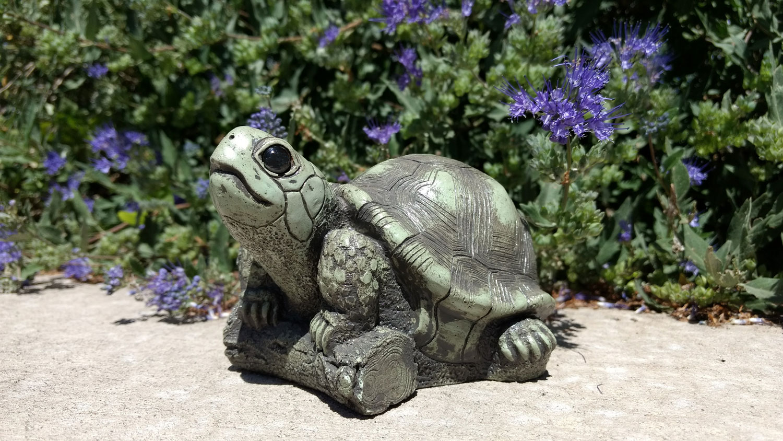 turtle-purple-flowers-5.jpg