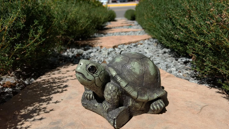 turtle-royal-path-11.jpg