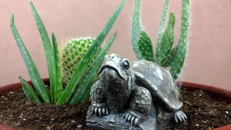 turtle-stucco-wall-pot-2.jpg