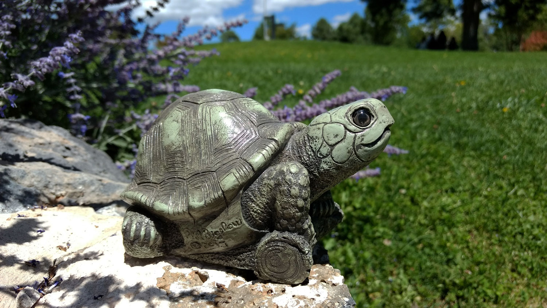 choice-turtle-purple-flowers-6.jpg