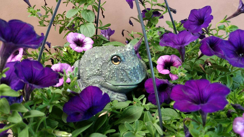 choice-frog-hanging-planter5.jpg