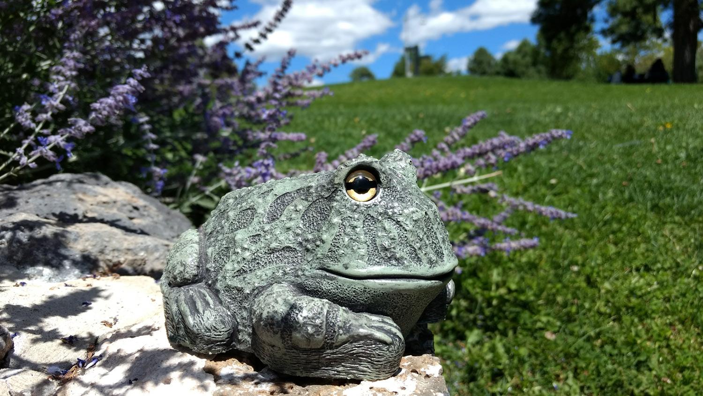 choice-frog-purple-flowers-16.jpg