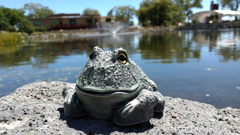 choice-frog-rock-pond12.jpg