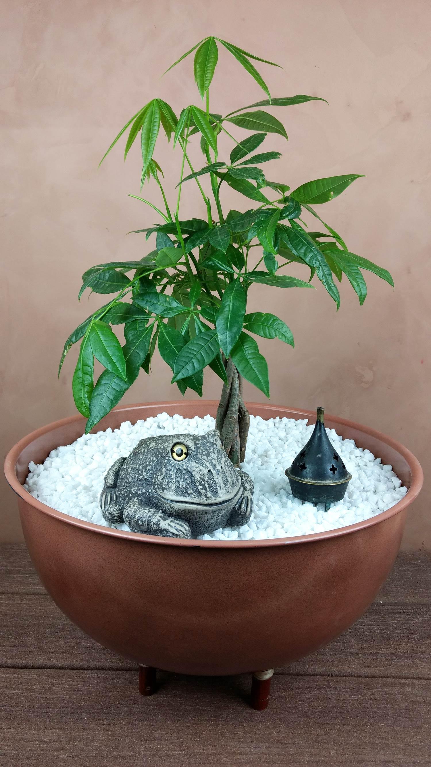 choice-frog-zen-planter-9.jpg