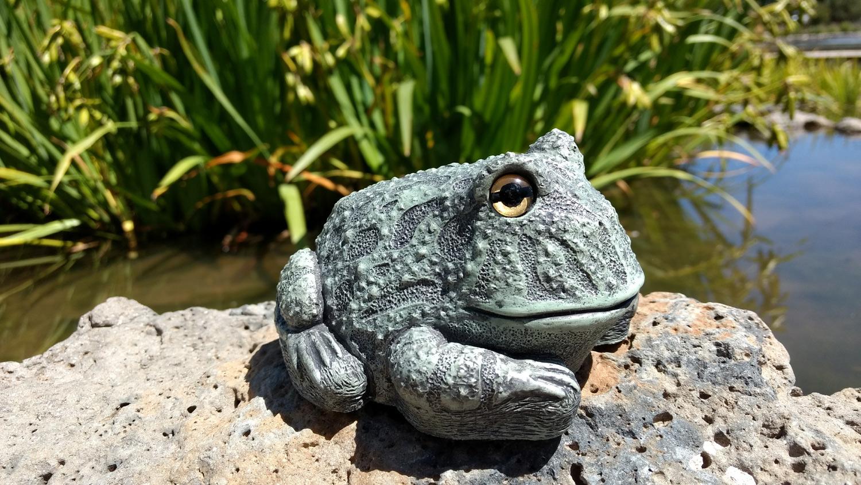frog-rock-pond11.jpg