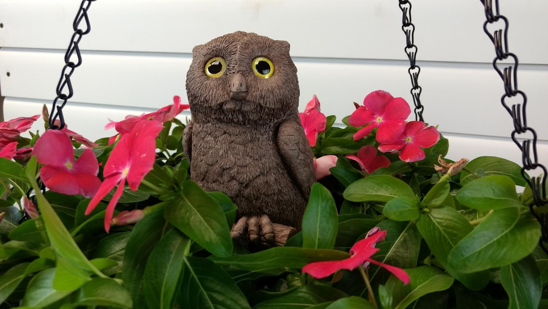 owl-hanging-planter-4.jpg