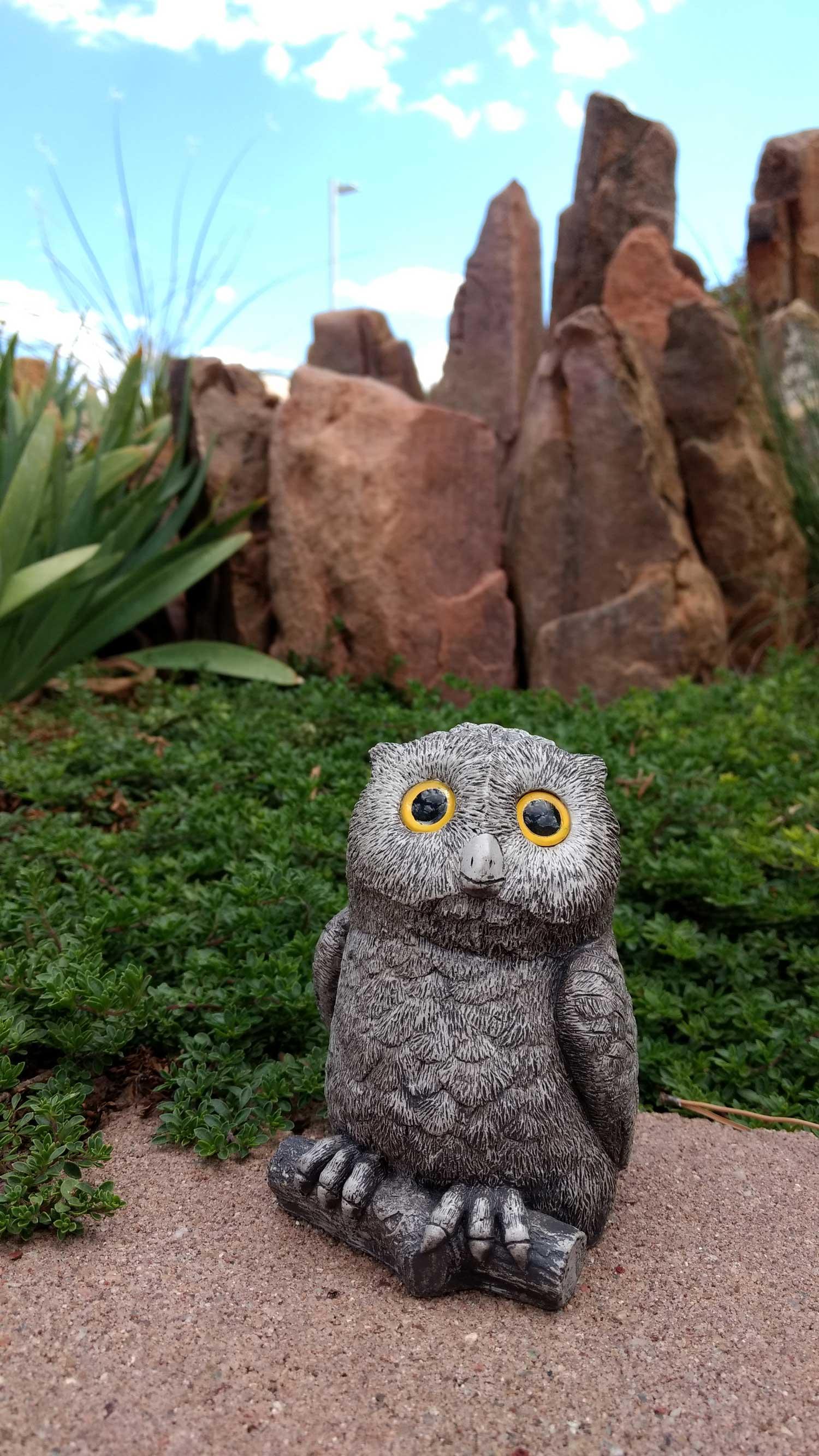 owl-in-rocks-12.jpg