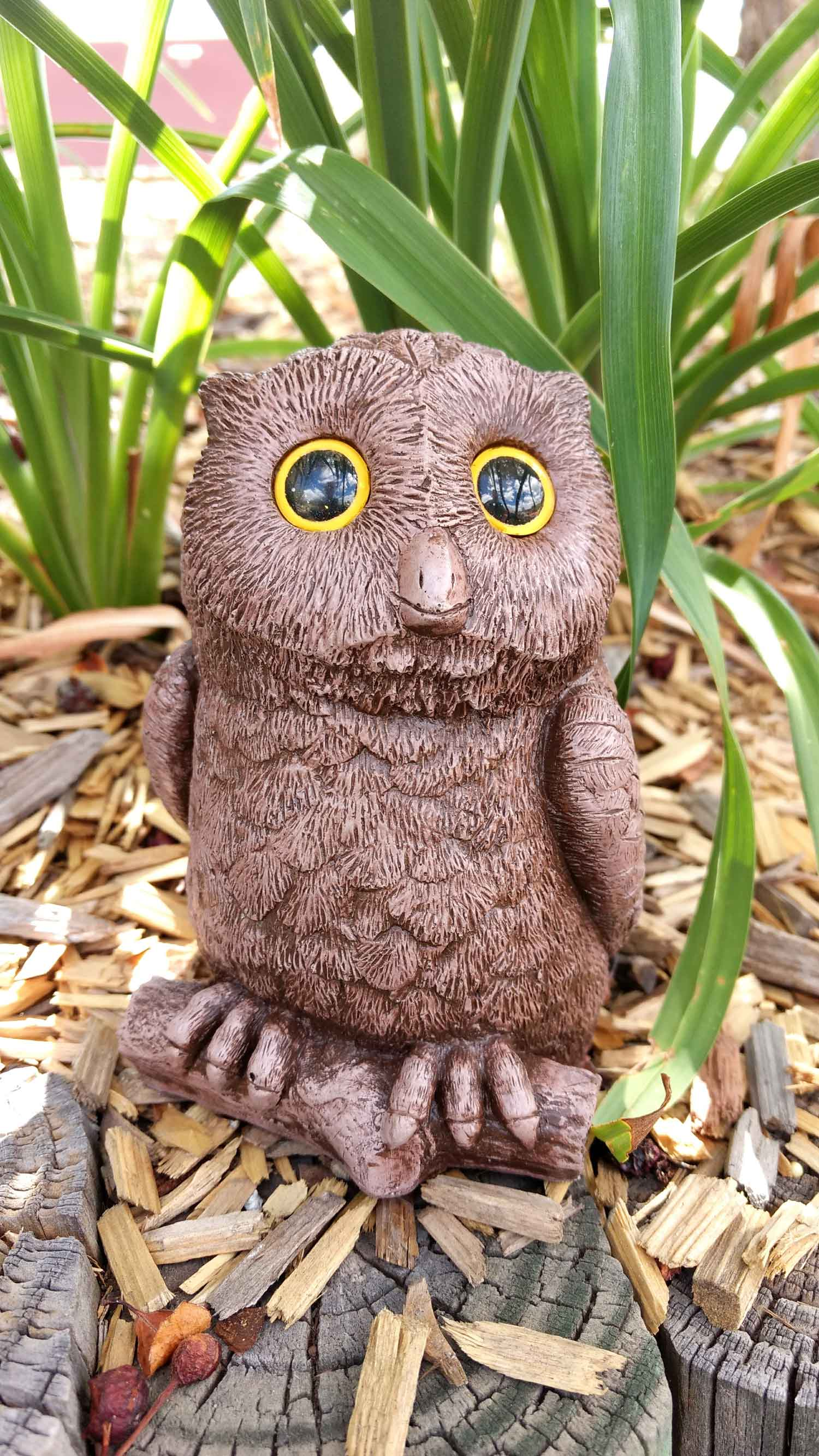 owl-in-wood-chips-11jpg.jpg