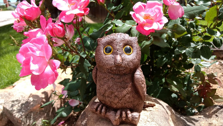 owl-pink-roses-8.jpg