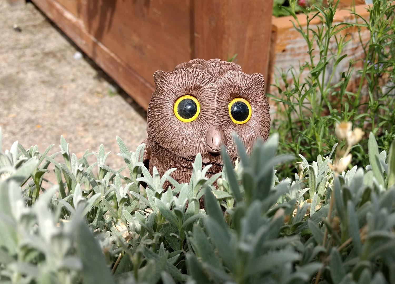 owl-peek-a-boo-15.jpg