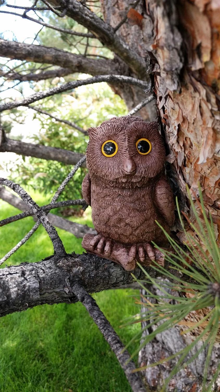 owl-in-tree-9 (844x1500).jpg