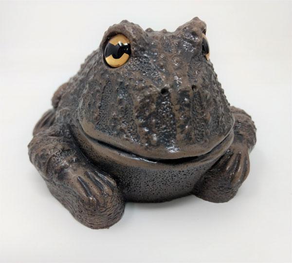 Bronze-frog-2.jpg