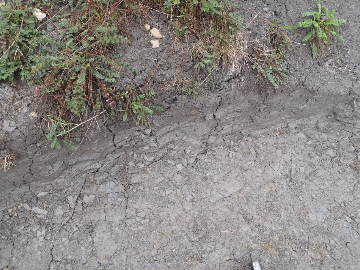 Desiccation cracking in shrinkable clay soils