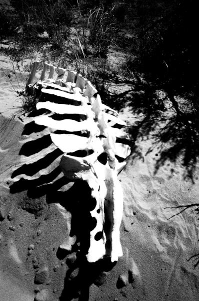 Oli fährt unseren - Offroader, als würde er dies täglich tun. Gelingt ihm eine der tiefen Sandpassagen nicht gleich beim ersten Versuch und wir bleiben stecken – keine Panik auf der Titanic – Rückwärtsgang rein, das Ganze zurück und mit vollem Tempo nochmals versuchen. Teils schwimmt der Jeep regelrecht auf der weichen Unterlage. Unterwegs erspähen wir einige Tierknochen, ja sogar ganze Skelette. Welcome to Wilderness...Bevor wir diesen Teil erforschen, veranstalten wir ein kleines Picknick und erleichtern so unsere Rucksäcke. Wasser wird in unsere Camelbaks nachgefüllt. Und Minuten später quälen wir uns wieder im roten Sand in Richtung verdrehter Bögen, Wellen und Höhlen. Auch hier hat Baumeisterin Mutter Natur ganze Arbeit geleistet. Dieser Abschnitt ist weitläufiger als der vorherige. Deshalb benötigen wir auch mehr Zeit. Es ist kurz nach Mittag und die Temperaturen steigen weiter. Das Licht ist um diese Tageszeit freilich auch nicht gerade optimal zum fotografieren. Trotz allem machen wir das Beste daraus.