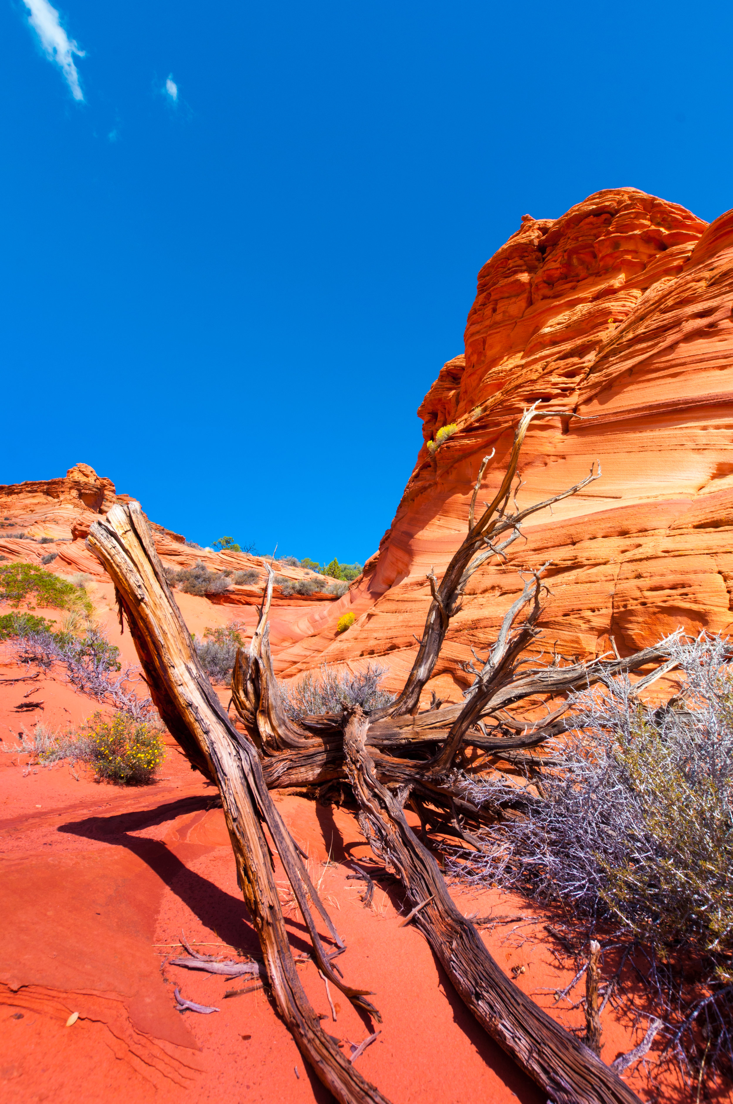 140918. Coyote_Buttes_South (8).jpg
