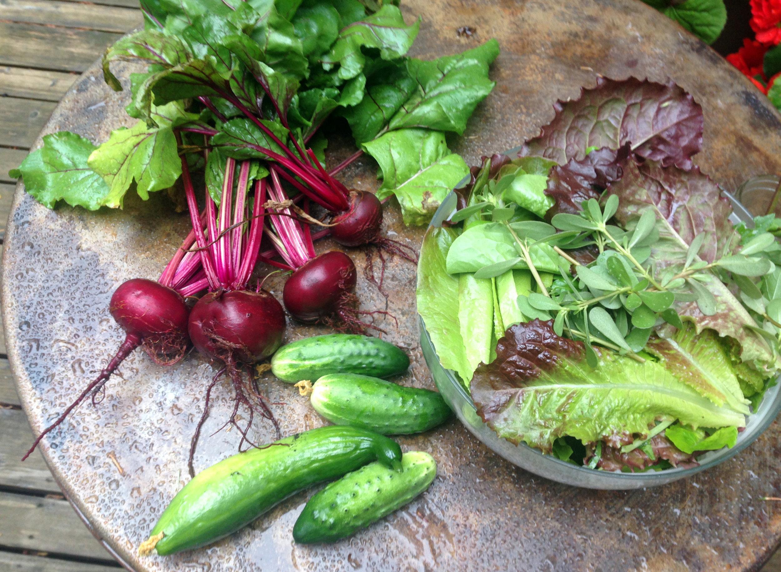 garden veggies'16.JPG