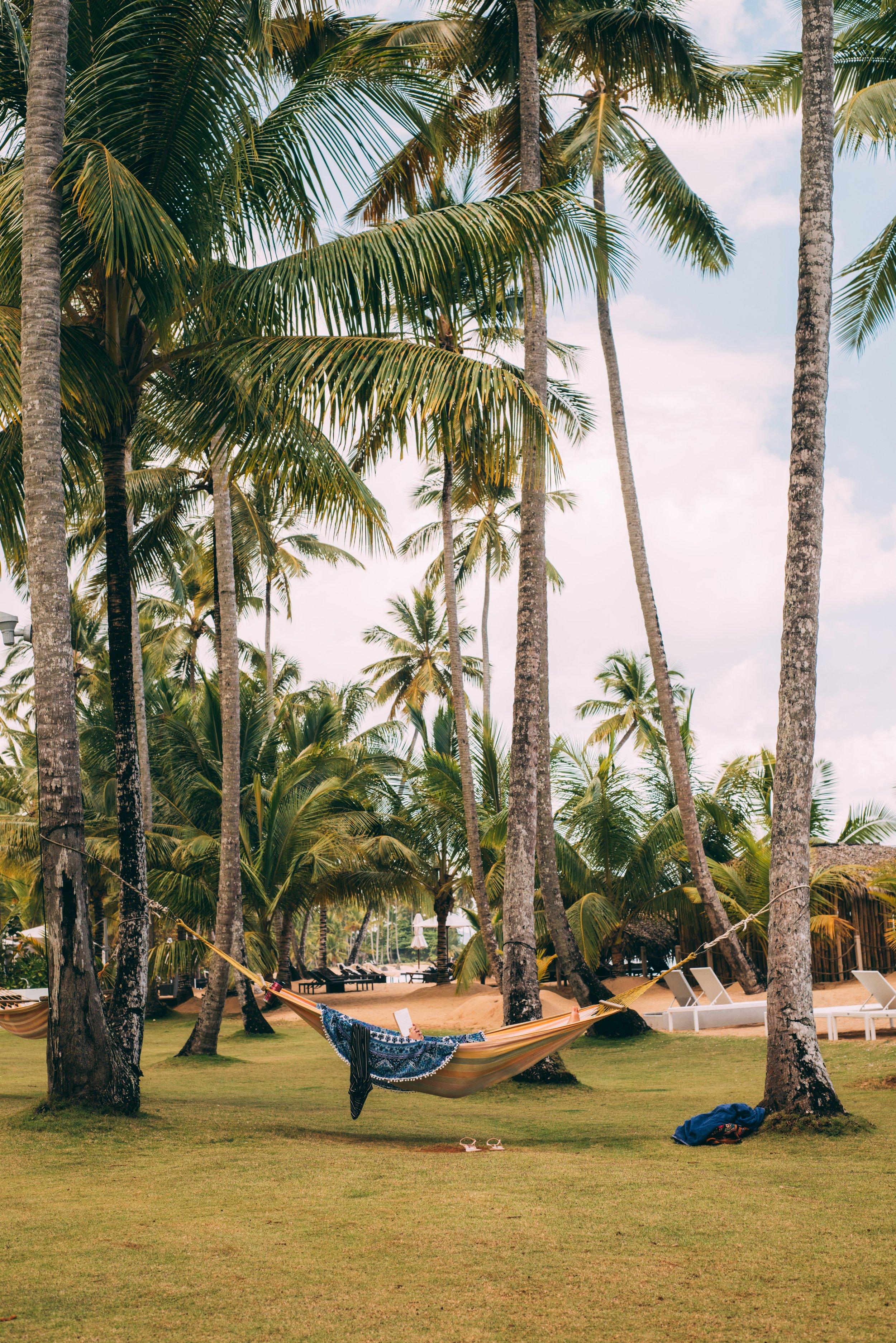 beach-beautiful-coconut-2252315.jpg