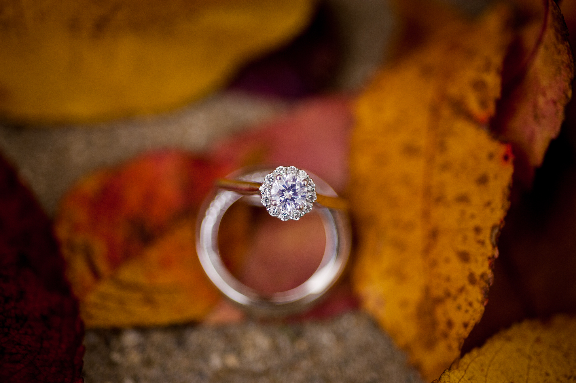 Ring photo with colorful fall leaves