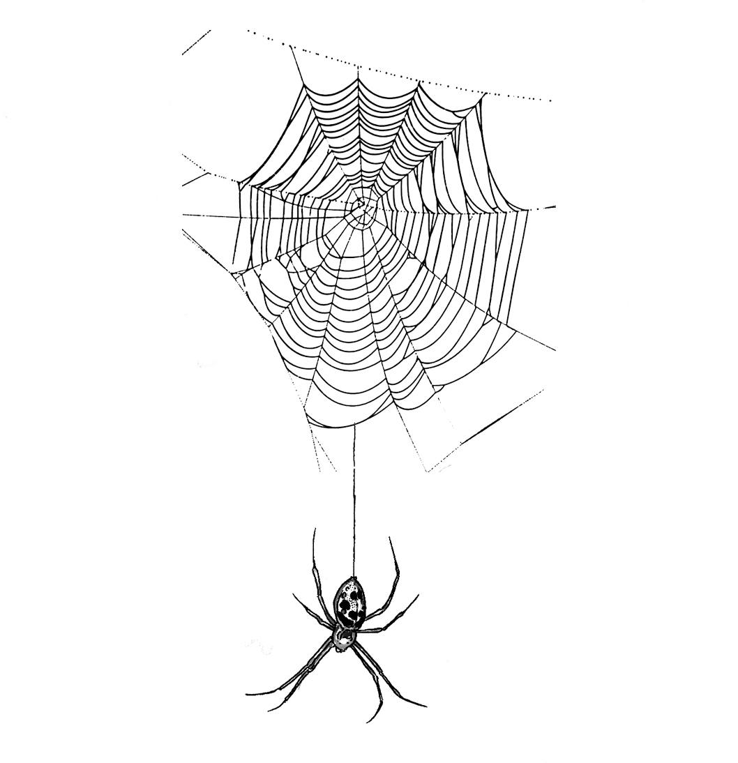 "- Spider and WebLocations: Could fit lots of placesMinimum size: 4""Hourly rate"