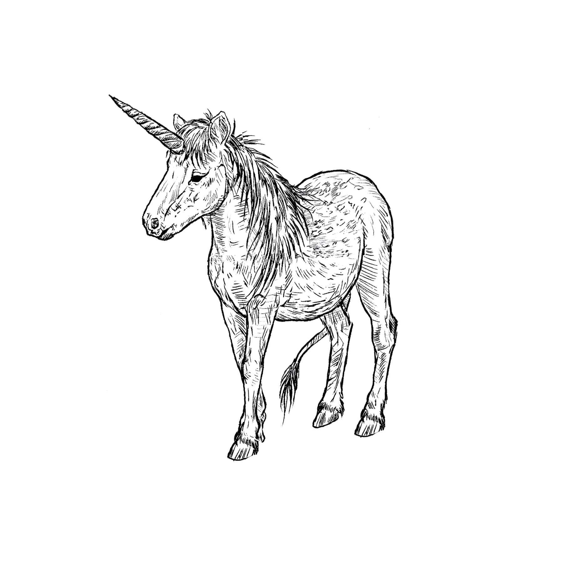 "- Spotted Unicorn PonyMinimum size: 3""Locations: pretty openHourly rate"