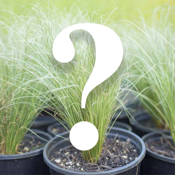 If you have a plant needing identified, email a photo and we will do our best to identify it for you. -