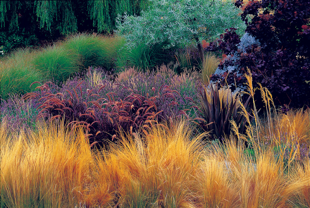 - To see more of our new variety of grasses coming in June please click the button below