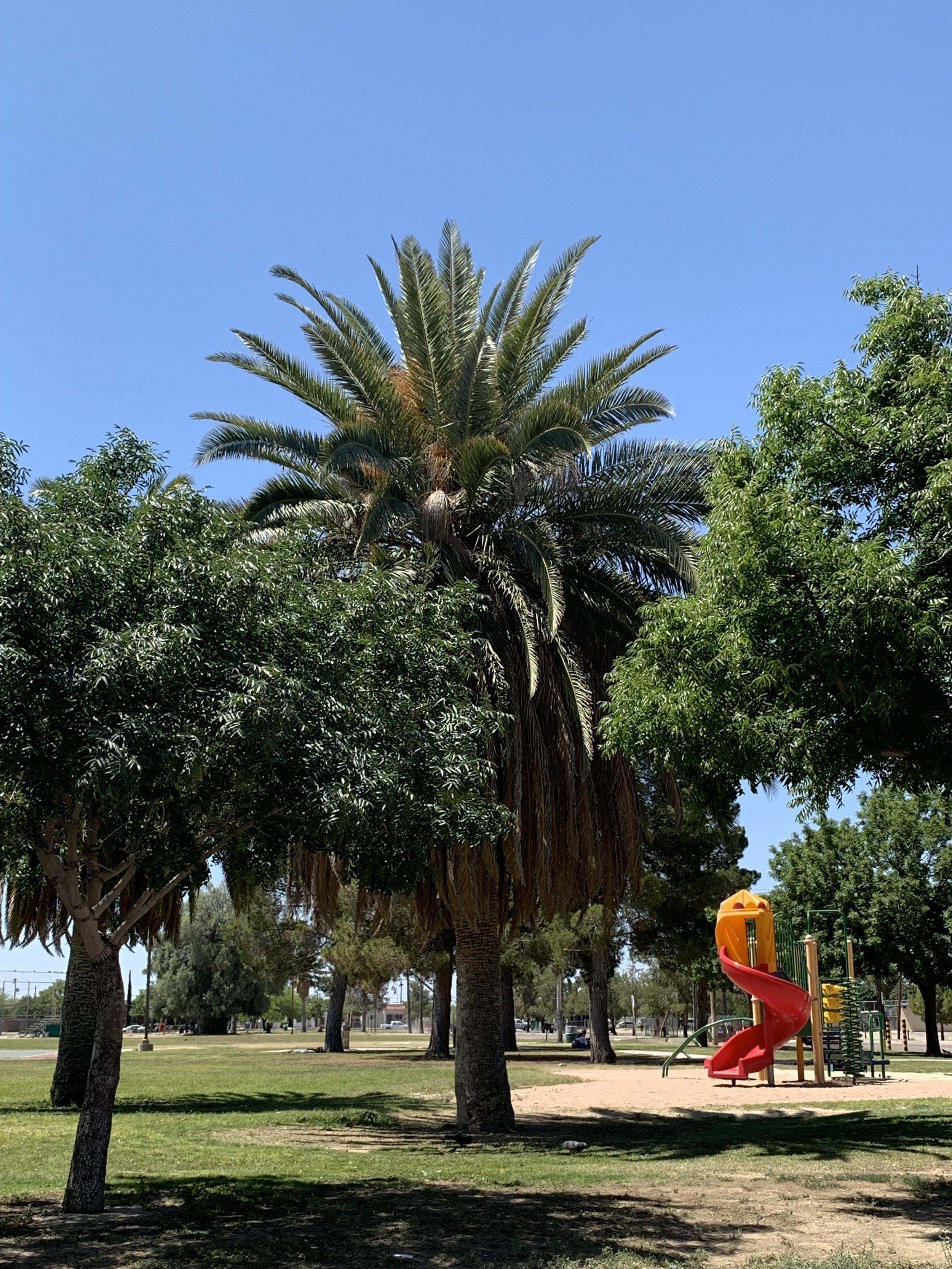 Santa Rita Park