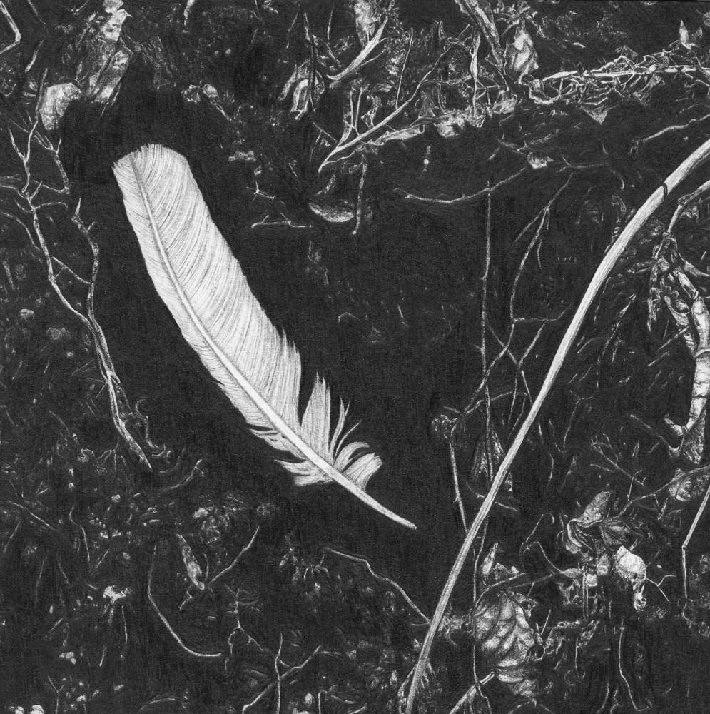 Feather I_angelagnyp.jpg