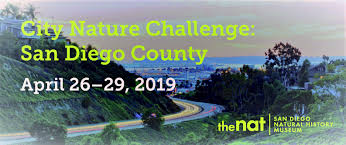City Nature Challenge San Diego.jpg